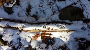 winter-track