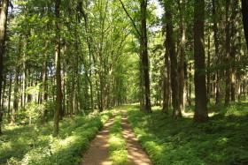 Nature_park_Planicky_hreben_in_2011_(3)