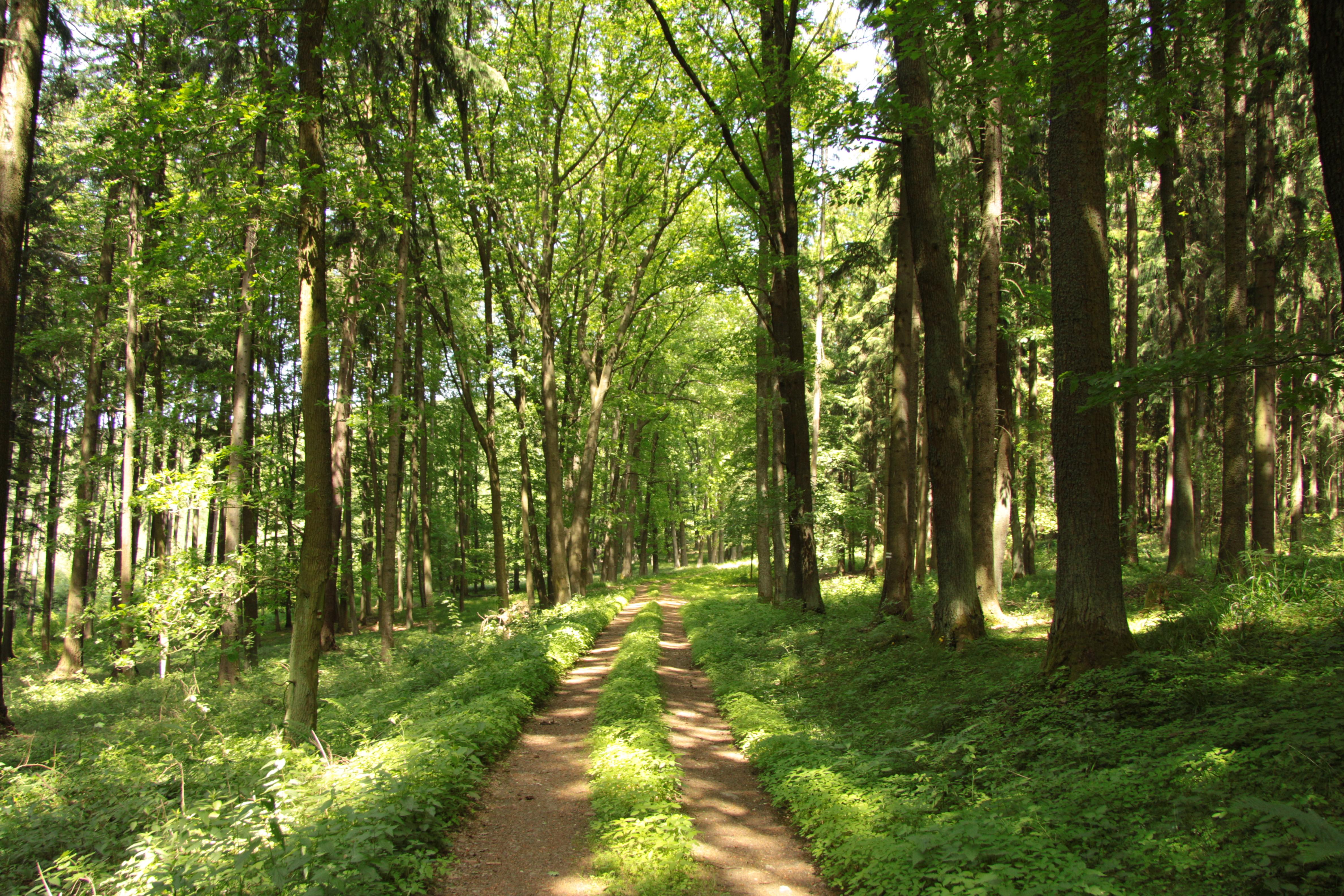 Free Restorative Nature Strolls
