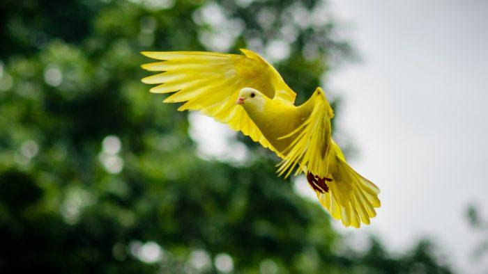 Bird Language Workshop